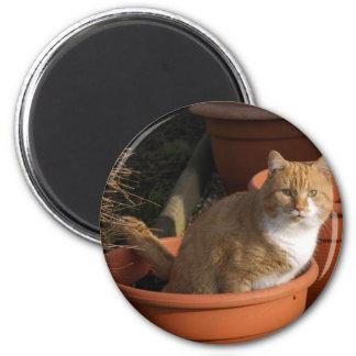 Ginger Tom Cat Magnet