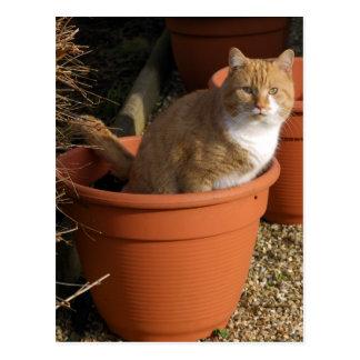 Ginger Tom Cat Postcard