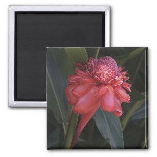 Ginger torch lily magnet
