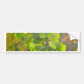 Gingko leaves in autumn sun bumper sticker