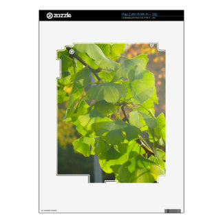 Gingko leaves in autumn sun iPad 2 skins