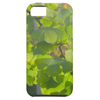 Gingko leaves in autumn sun iPhone SE/5/5s case