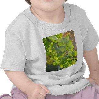Gingko leaves in autumn sun tee shirt