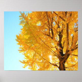 Gingko Tree, Nagano Prefecture, Japan Posters