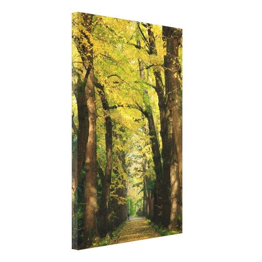 Ginkgo Biloba trees Canvas Print