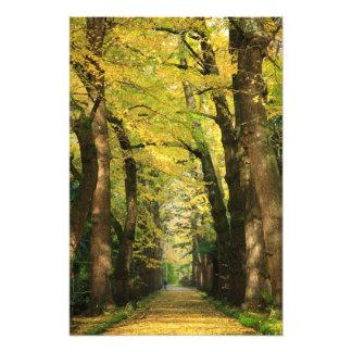 Ginkgo Biloba trees Photo Print