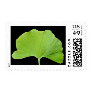 Ginkgo (Ginkgo biloba) leaf Stamps