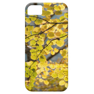 ginko leaves iPhone SE/5/5s case