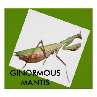 GINORMOUS MANTIS POSTER