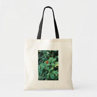 Ginseng ( American ) Bags