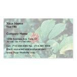 Ginseng (americano) plantilla de tarjeta de visita