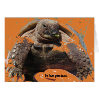 Gio The Tortoise Cards