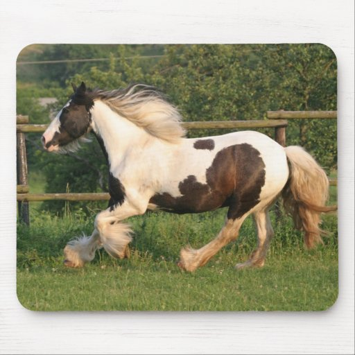 Gipsy horse mousepad