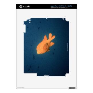 Girabaldi iPad 3 Decals