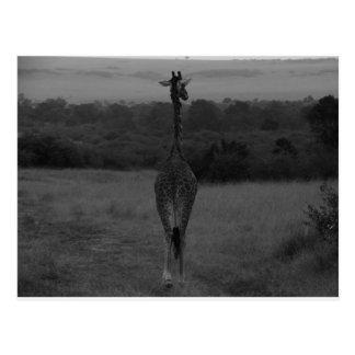 Giraf Post Card