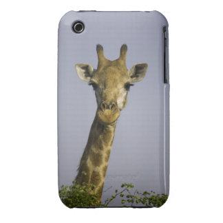 Giraffa Camelopardalis iPhone 3 Case