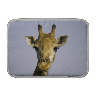 Giraffa Camelopardalis MacBook Sleeves