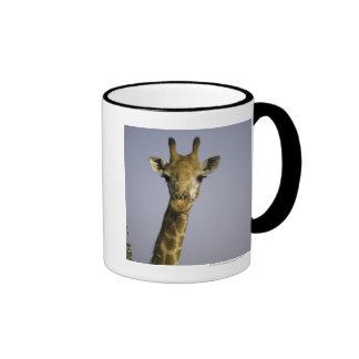 Giraffa Camelopardalis Taza De Café