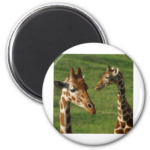 giraffe2 imán redondo 5 cm