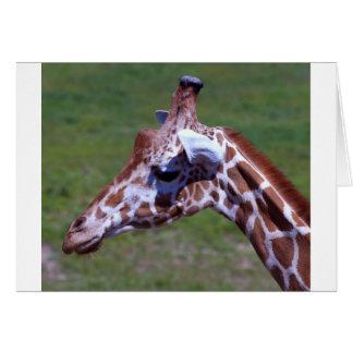 Giraffe 158 card