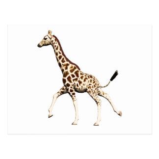 Giraffe 1 postcard
