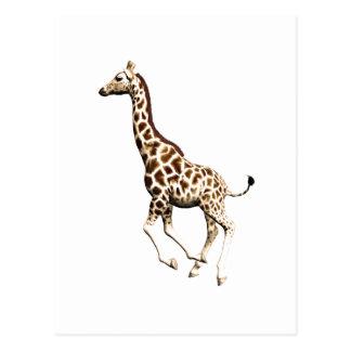 Giraffe 3 postcard