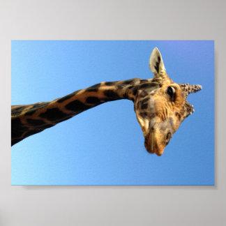 giraffe-468948 FUNNY HUMOR WILD ANIMALS ATTITUDE L Poster