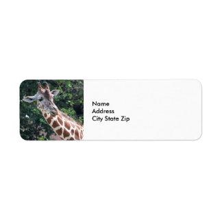 Giraffe 7031 label