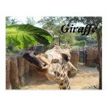 Giraffe # 8 postcard