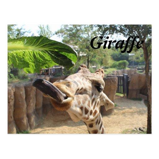 Giraffe # 8 postcards