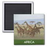 giraffe africa 2 inch square magnet