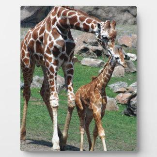 Giraffe Africa Safari Animal Personalize Giraffes Plaque
