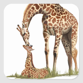 Giraffe and baby calf kissing square sticker
