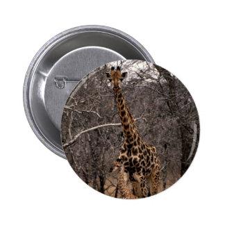 Giraffe and Baby Giraffe Pinback Buttons