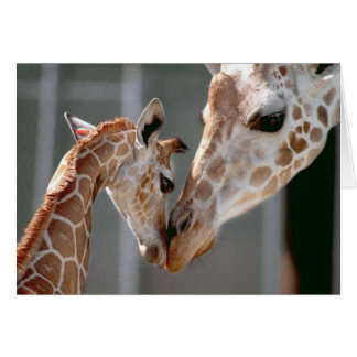 Giraffe and Baby note card