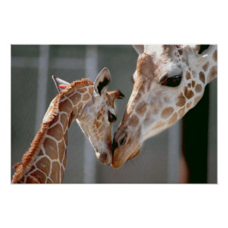Giraffe and Baby print