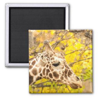 Giraffe and leaves magnet