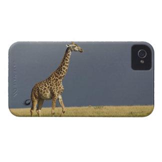 Giraffe and stormy sky, Giraffa camelopardalis iPhone 4 Case-Mate Case