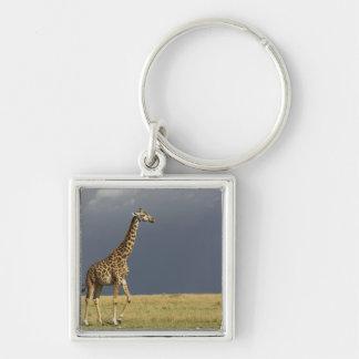 Giraffe and stormy sky, Giraffa camelopardalis Keychain