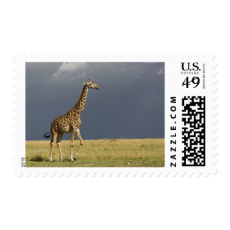 Giraffe and stormy sky, Giraffa camelopardalis Postage