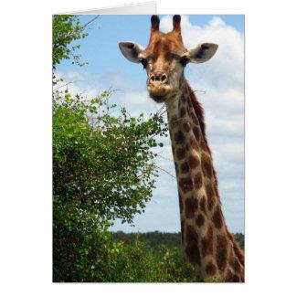 Giraffe Animal Safari Card