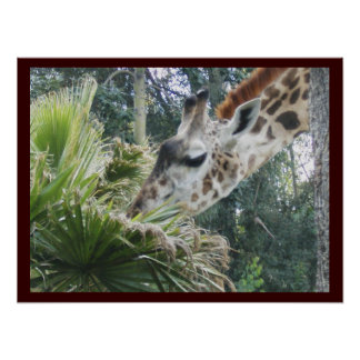 Giraffe at Lunch Posters