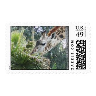 Giraffe at Lunch Stamp