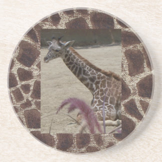 Giraffe at Rest Drink Coaster