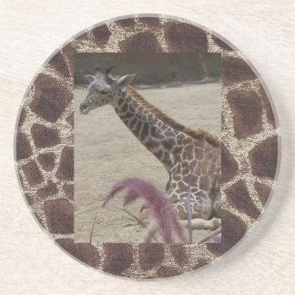 Giraffe at Rest Drink Coaster