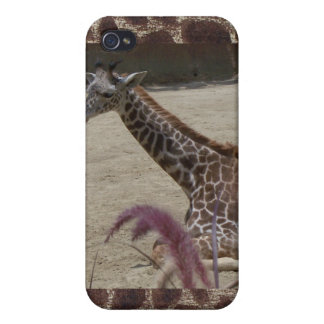 Giraffe at Rest iPhone 4/4S Covers