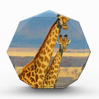 Giraffe Acrylic Award