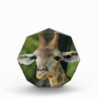 Giraffe Awards