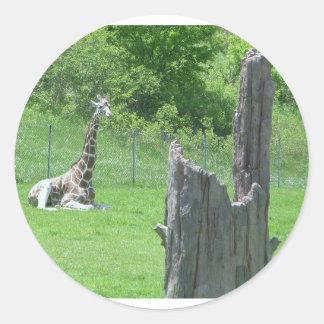 Giraffe Behind a Broken Tree Stump During Summer Classic Round Sticker