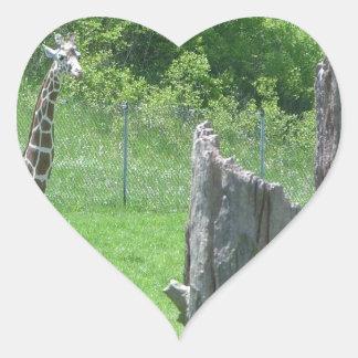 Giraffe Behind a Broken Tree Stump During Summer Heart Sticker